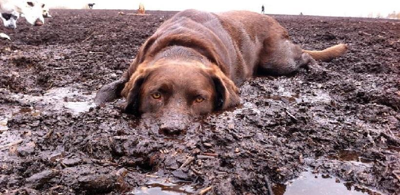 C'è fango e fango